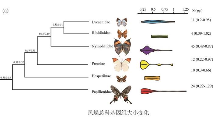 蝴蝶基因组大小进化研究取得新进展