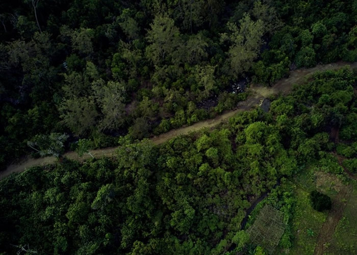 联合国生物多样化公约组织草拟2030年环保目标 冀扭转地球第六次生物大灭绝