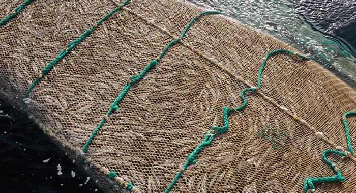 美国加利福尼亚大学科学家:鱼棒和人造蟹棒是最强大气污染源