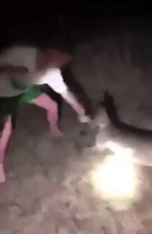 网络流传一段澳洲小袋鼠遭少年殴打的影片 一旁拍摄的少女大笑