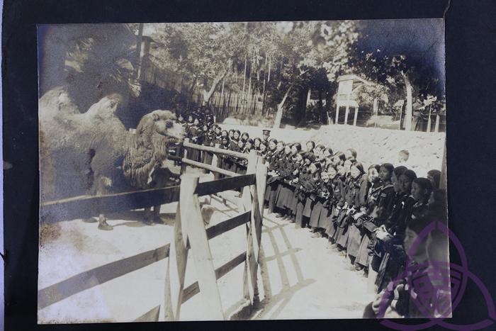 1914 年开园的圆山动物园,在日治时代是新潮的现代化景点,也是新春热门出游地,许多父母会在新年假期带小孩动物园玩。 图为 1920 年代,二高女学生到动物园校