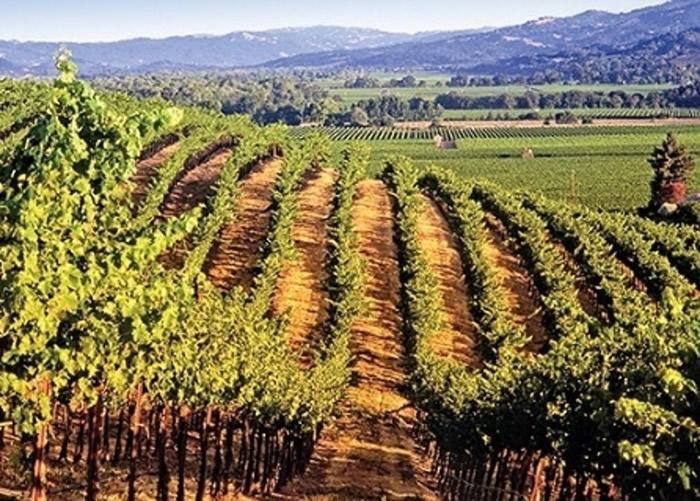 美国加州索奴玛县葡萄园泄漏36万公升红酒入俄罗斯河 恐成生态灾难