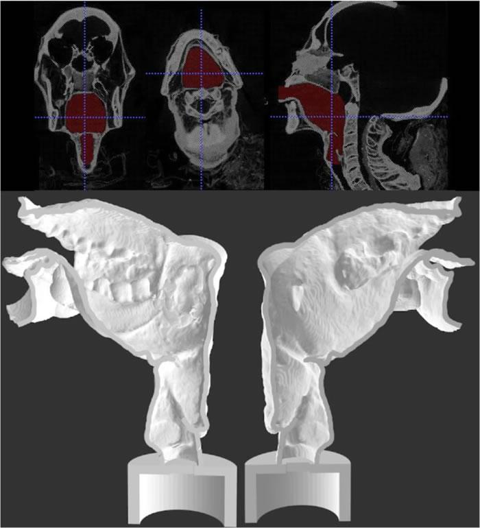 考古学家利用电脑断层扫描及3D打印技术重塑3000年前古埃及祭司木乃伊声道