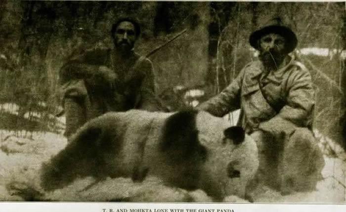 1929年,一对美国兄弟拿着博物馆赞助的经费来到四川,猎杀到了一只大熊猫。