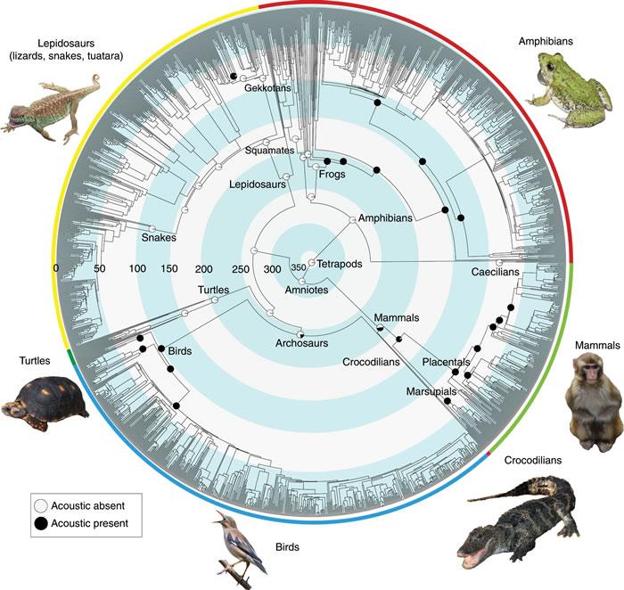 新的进化研究表明动物鸣叫或真是源自黑夜