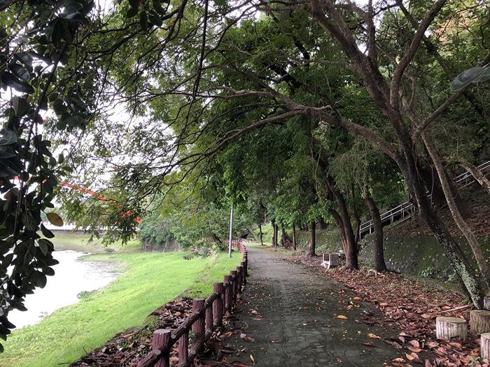 美仑溪口菁华桥枝叶扶疏、苍郁盎然,不但民众喜爱来此散步,也是台湾狐蝠喜爱的栖地。 摄影:廖静蕙