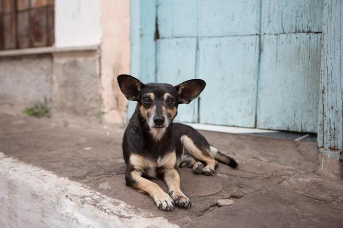 一条流浪狗在巴西的迪亚曼蒂纳高地国家公园(Chapada Diamantina National Park)休息。 全世界有多达3亿只流浪狗。 PHOTOGRA