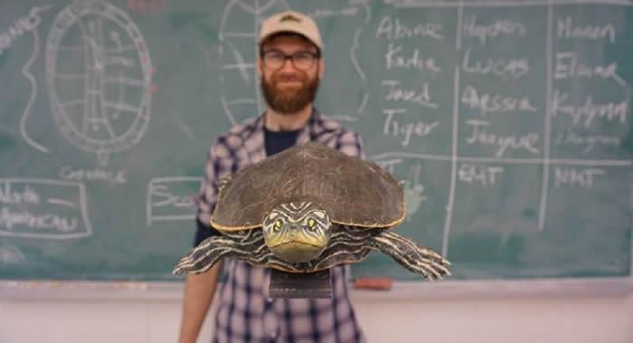 """加拿大生物学家为濒临灭绝的乌龟""""地图龟""""做出了性爱玩偶 研究雄性乌龟性行为"""