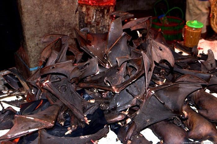 2019新型冠状病毒疫情蔓延 印尼蝙蝠餐仍畅销热卖