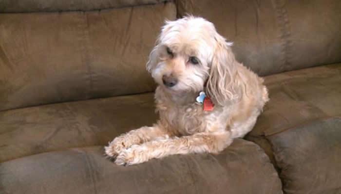 美国密西根州泽兰德市一只宠物狗帮助家人发现燃气灶一氧化碳泄露