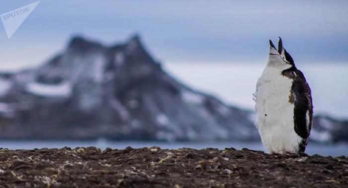 过去50年来南极某些地区的企鹅种群减少了75%以上