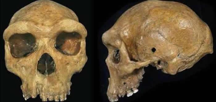 """研究人员报告现代西非人的祖先曾与一种""""幽灵""""古人类杂交"""