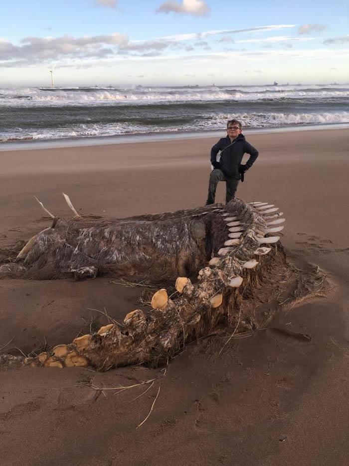 席亚拉飓风把神秘海洋生物骨骸带到苏格兰东北海岸