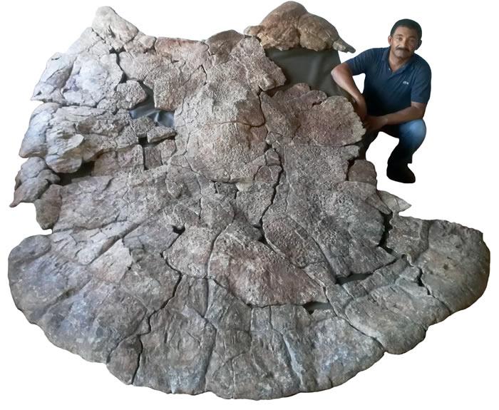 """发现龟壳长达3米的巨型""""地纹骇龟""""化石 500-1000万年前生活在南美洲淡水沼泽地区"""