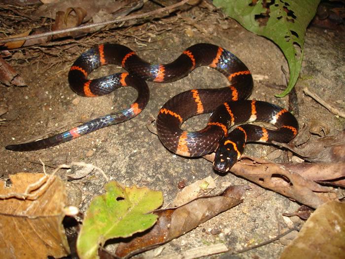 """热带蛇类的死亡——生物多样性丧失的""""不显眼的""""后果"""