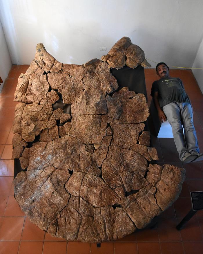 南美洲发现1公吨重巨型地纹骇龟化石Stupendemys geographicus 下颚构造还能吃鳄鱼