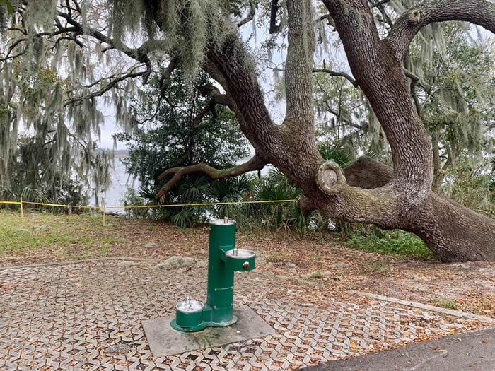 美国佛罗里达州莱克兰市霍林斯沃思湖边水蛇集体交配 场面异常吓人