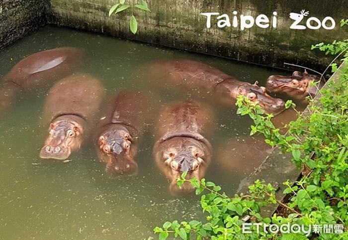 河马睡觉是待在水里的