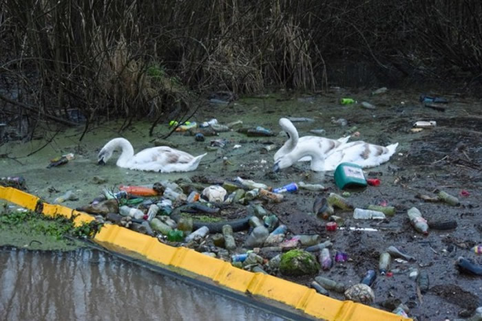 英国最古老运河——桑基运河宛如生态地狱般的场景:天鹅被迫游在垃圾堆