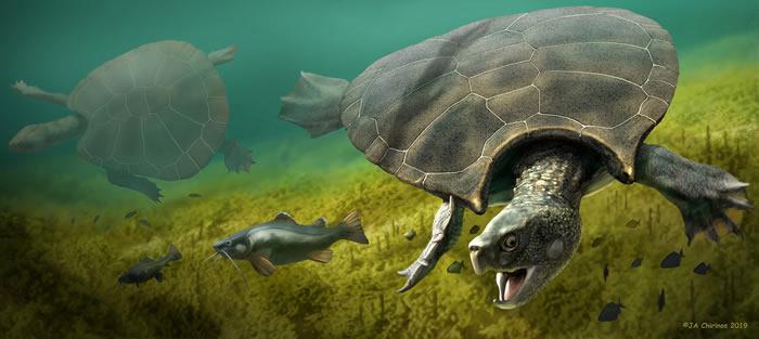 """1200万年前南美洲北部沼泽与河流中的史前巨龟""""地纹骇龟""""浮出水面"""