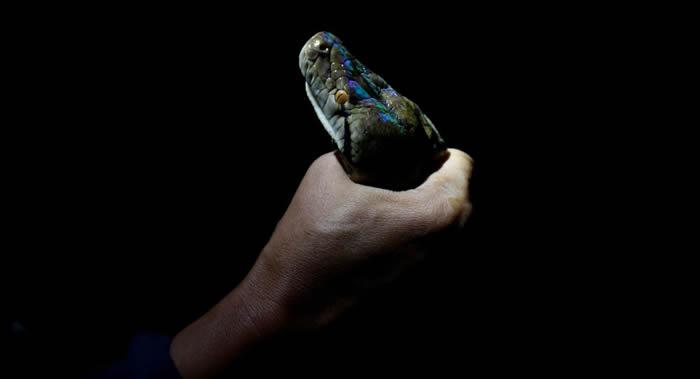 """生物学家称蛇毒可以""""瞬间杀死""""乳腺癌和大肠癌细胞"""