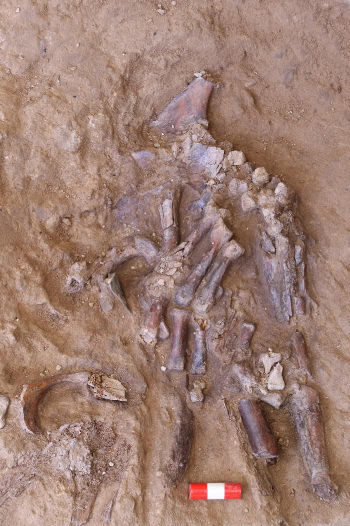沙尼达尔Z(Shanidar Z)证明7万年前尼安德特人或已有丧葬习俗