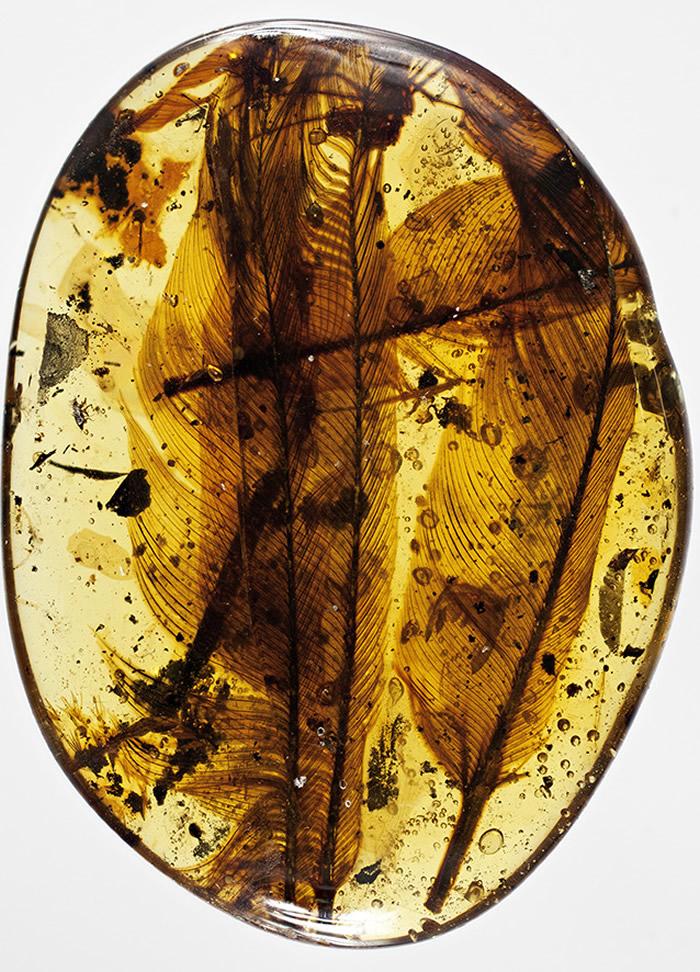 缅甸白垩纪琥珀中发现一批形态各异的恐龙羽毛