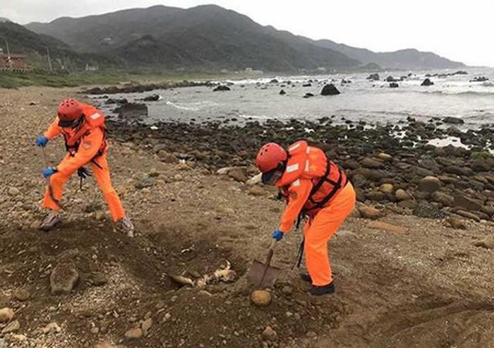 台湾史上最重大保育海龟集体死亡事件 发现6具的绿蠵龟和1具榄蠵龟遗体