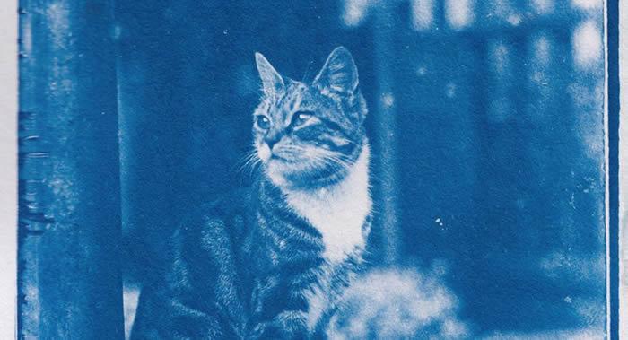 巴黎摄影史学家马修·斯特恩(Mathieu Stern)发布摄于120年前放在时间胶囊里的猫咪照片