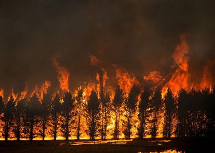 史无前例的澳洲山火烧毁21%森林 研究指与气候变化有关