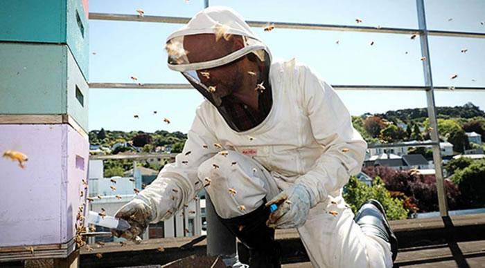奥塔哥大学新研究发现蜜蜂大脑和人类大脑活动有相似之处