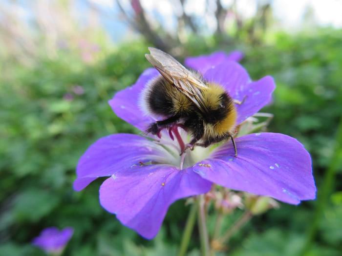 农药污染可能是引发大黄蜂幼虫大脑异常发育的原因