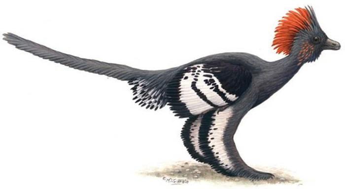 身披羽毛的温血恐龙(引自Li et al., 2010)