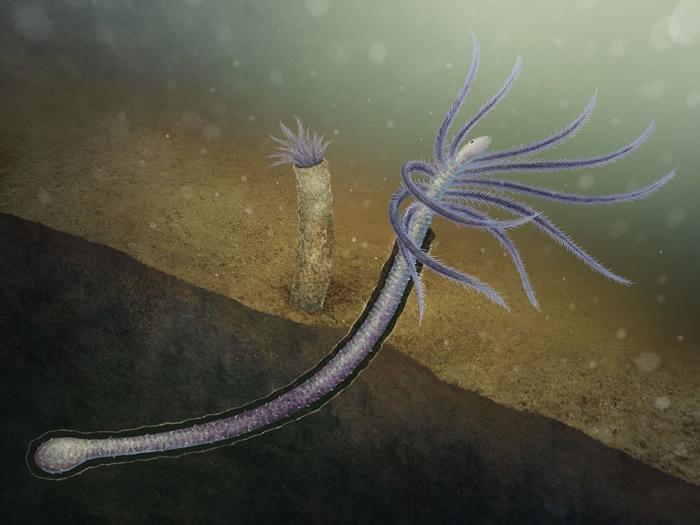 """寒武纪""""澄江生物群""""中形态奇异的火把虫实际上是丢失身体后部腿肢的叶足动物"""