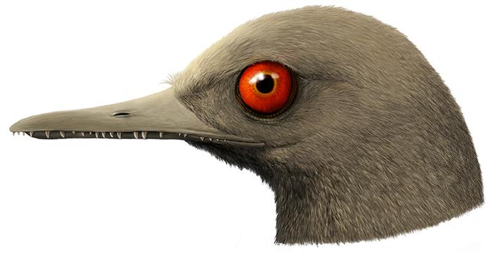 缅甸白垩纪琥珀中发现最小恐龙——宽娅眼齿鸟Oculudentavis khaungraae