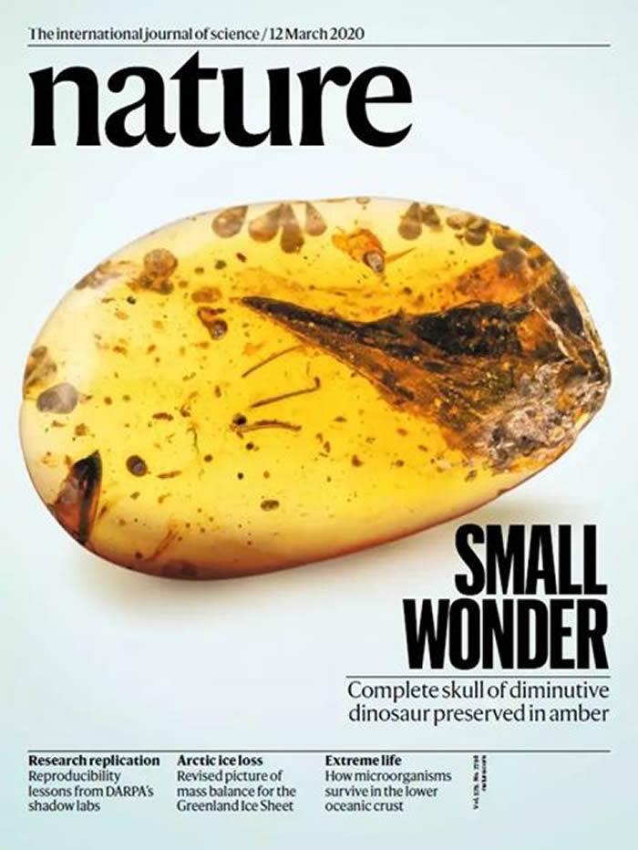 """学术争鸣:琥珀中的""""史上最小恐龙"""" 也许是史上最大乌龙"""