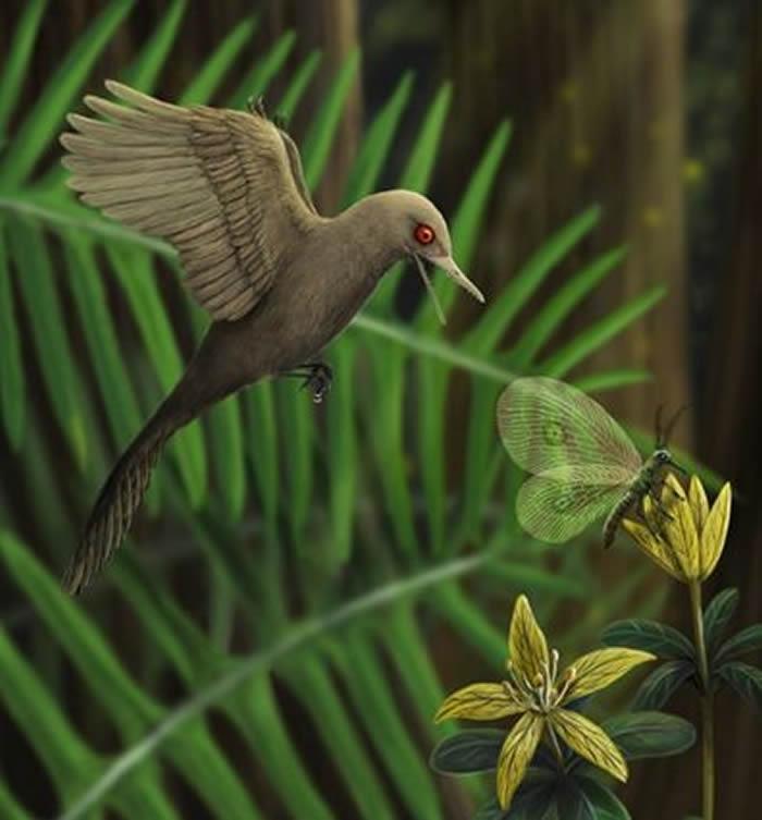眼齿鸟生态复原图