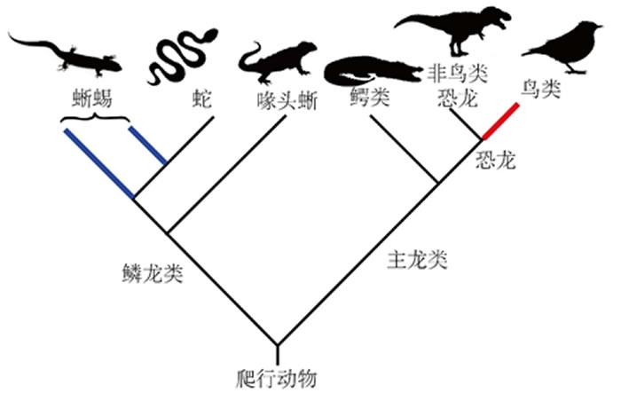 爬行动物演化关系简图