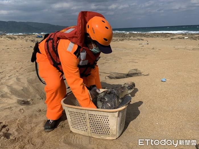"""台湾屏东县满州乡金沙滩海域发现一只往生的""""绿蠵龟"""""""