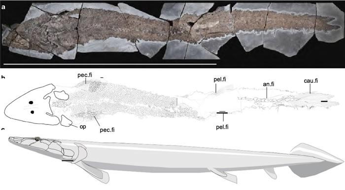 """加拿大魁北克的埃斯屈米纳克地层迄今最完整的希望螈化石揭示早期""""鱼指"""""""