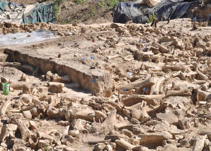 俄罗斯Kostenki 11遗址发现2.5万年前长毛象骨圈 揭人类冰河时期挣扎求存