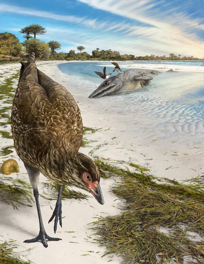 神奇鸡!欧洲6680万年前晚白垩世地层中发现迄今最古老现代鸟类头骨化石