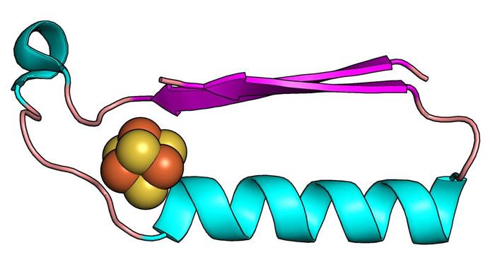 英国科学家发现35亿到25亿年前地球生命进化过程中最早的两个代谢蛋白质