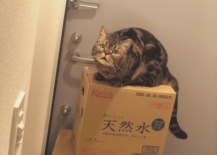 """日本铲屎官大胆偷食小鱼干 爱猫""""怒瞪""""主人"""