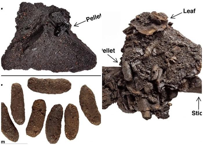 美国洛杉矶拉布瑞亚沥青化石坑发现数百颗5万年前的啮齿动物粪便化石