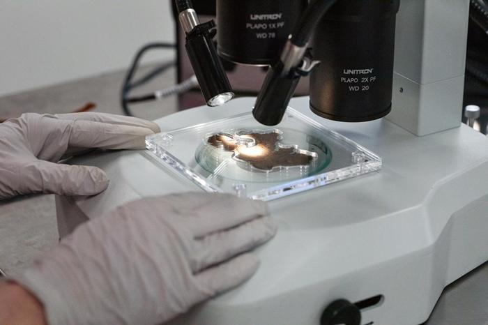 研究人员谨慎地在高倍率显微镜下检视所有16片碎片的表面──同时也不能破坏脆弱、酥脆的碎片。 PHOTOGRAPH BY REBECCA HALE, NGM ST