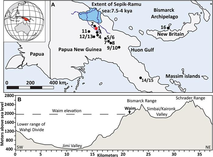 史前人造器物提示新几内亚有独立发展的新石器时代