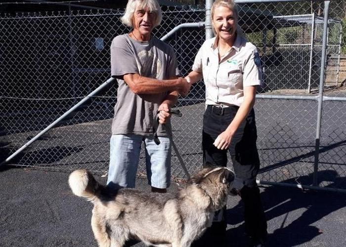 澳洲新南威尔士省哈士奇犬走失流浪逾200公里 2年后终与主人团聚
