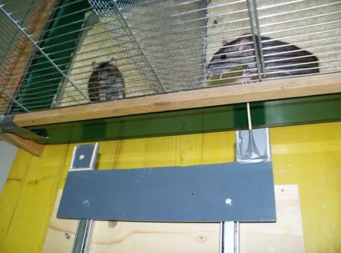 "《PLOS Biology》杂志:""饥饿的气味""可能促使老鼠向同伴分享食物"