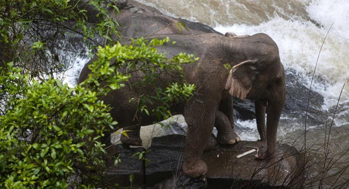 泰国旅游业大象因新型冠状病毒疫情的爆发面临威胁